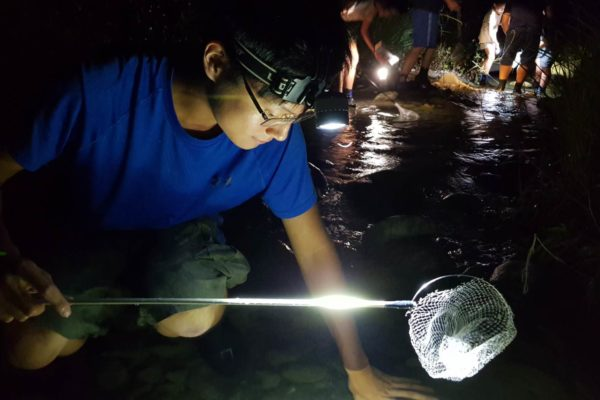 那山夜間生態探索