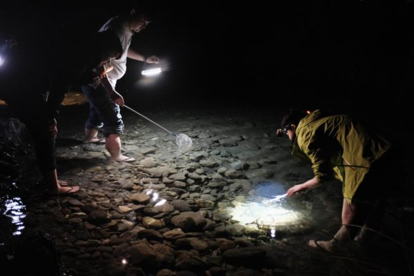 Na Sun Night Ecological Exploration